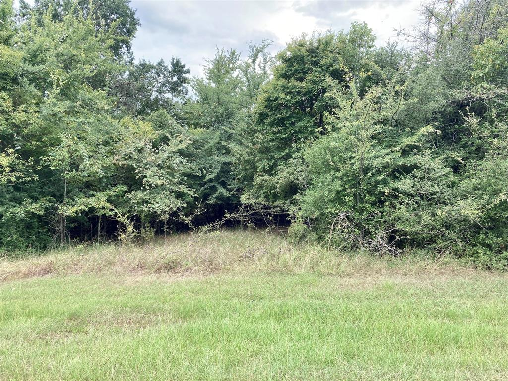 Lot 29 County Rd 377 1.6931, Marquez, Texas 77865, ,Lots,For Sale,County Rd 377,98211621