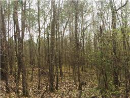 1837 ac wilderness road, point blank, TX 77364