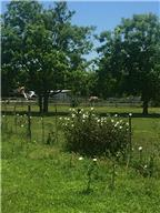 Houston Home at 0047 Frazer Lane Richmond , TX , 77469 For Sale