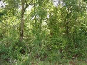 000 towering pines, livingston, TX 77351