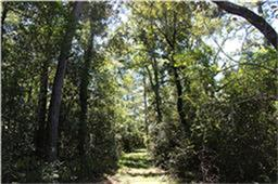15 acres Forest Trace, Richards, TX 77873
