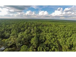 Actual view of the 9.82 acres in Sam Houston State Forest.