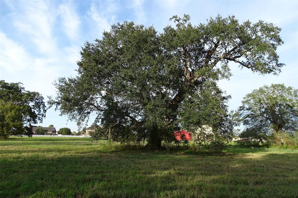 2902 Horse Trail Drive, Rosharon, TX 77583