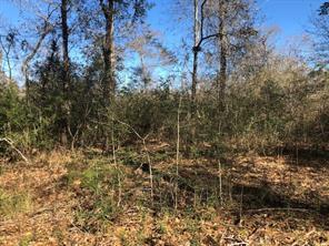 66 acres brenda, magnolia, TX 77355