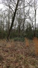 0000 Woodland Shores, Point Blank, TX, 77364