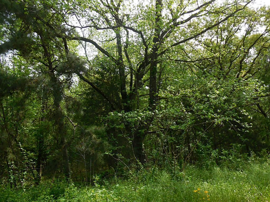 TBD Raven Hill, Oakhurst, TX 77359