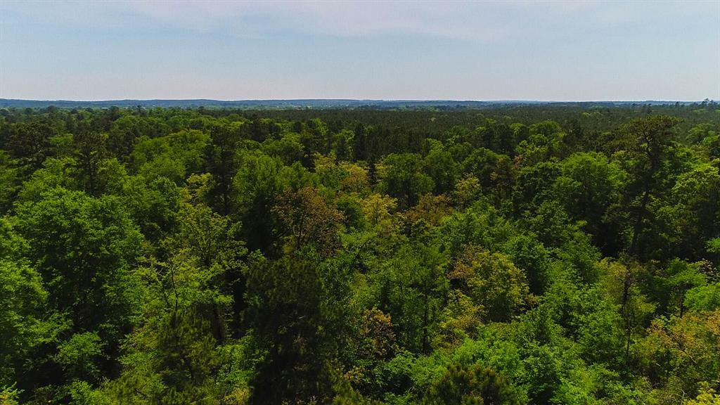 384 Acres State Highway 75 North, Huntsville, TX 77320