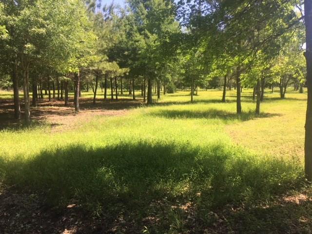 TBD Farm Road 3126, Livingston, TX 77351