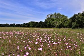 TBD County Road 227, Hungerford, TX 77448
