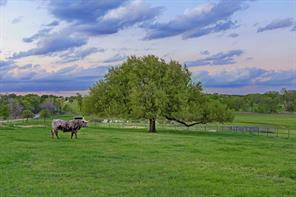 A spectacular view of the countryside with mature trees and ample pasture for livestock to graze.