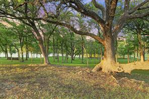 View of the beautiful stately trees that are located throughout the property.