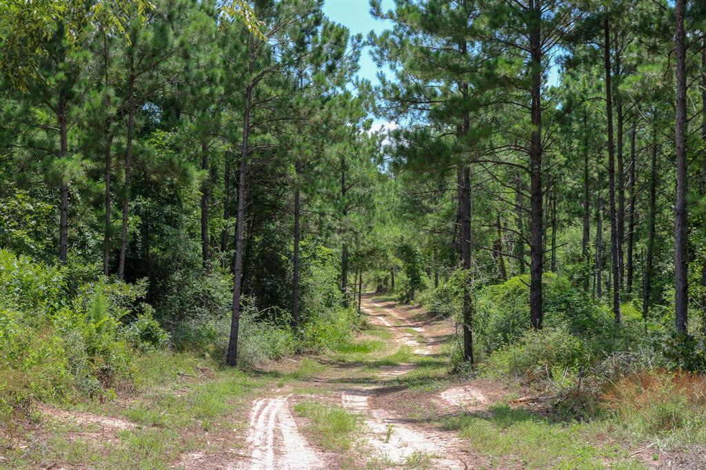 142 Acres Deer Run Road, Navasota, TX 77868