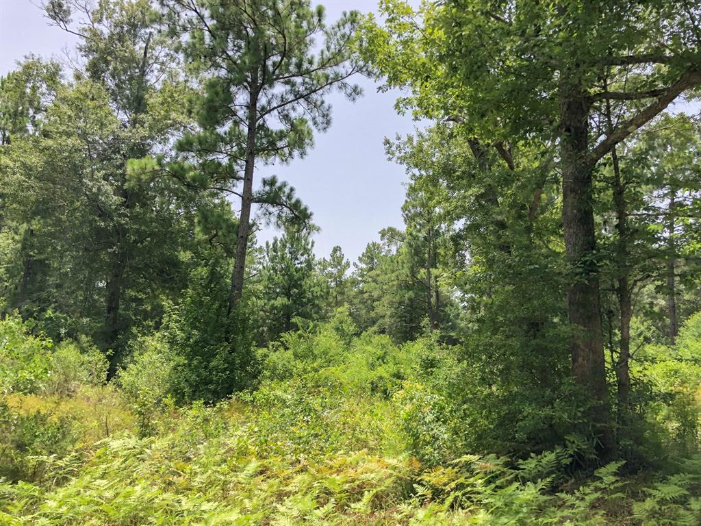 44 Ac Mill Creek Drive, Silsbee, TX 77656