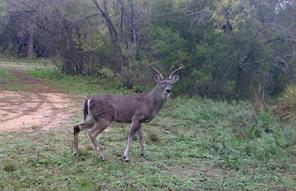 tbd county road 646, hondo, TX 78861