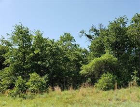 27 Acres CR 330, Milano TX 76556