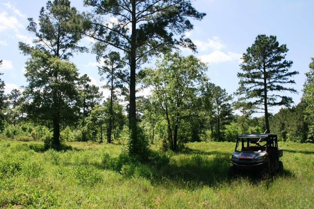 TR28A Felix Currie Road, Oakhurst, TX 77359