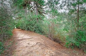 Wide area paths are perfect spaces to enjoy nature and get some exercise.