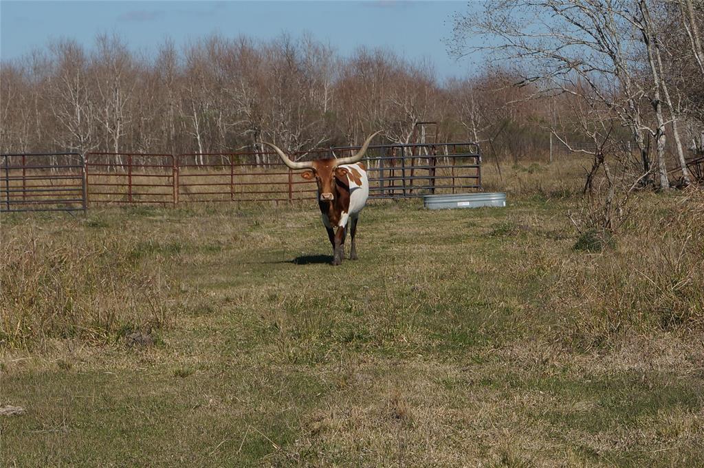0 County Road 165/166, Alvin, TX 77511