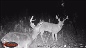 TBD Deep Woods, Plantersville, TX 77363