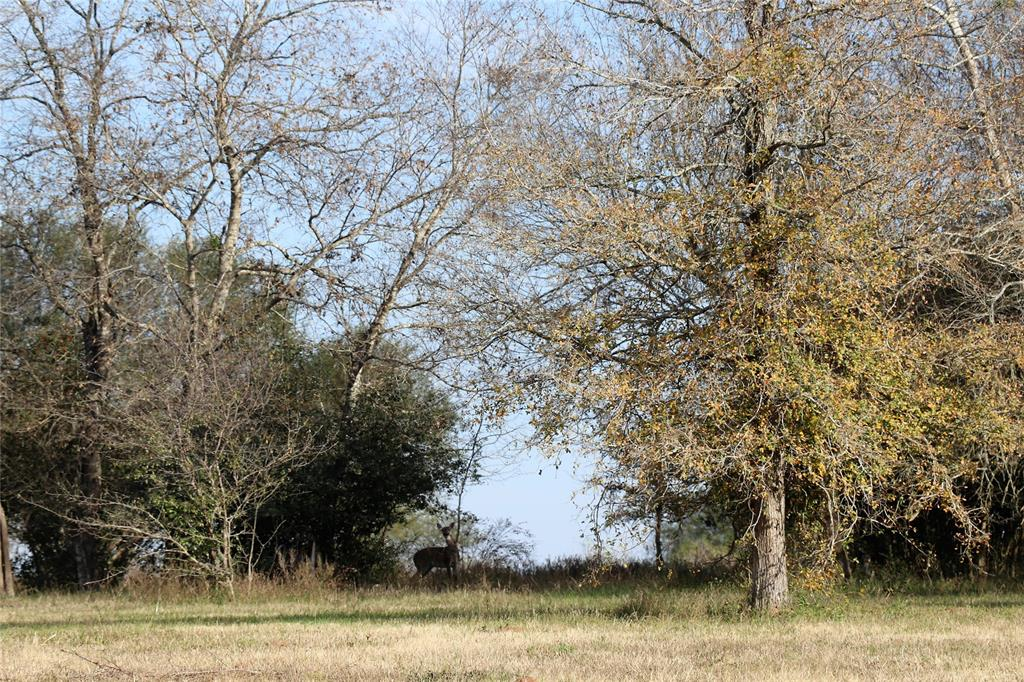 10954 Stefka Road, Hempstead, TX 77445