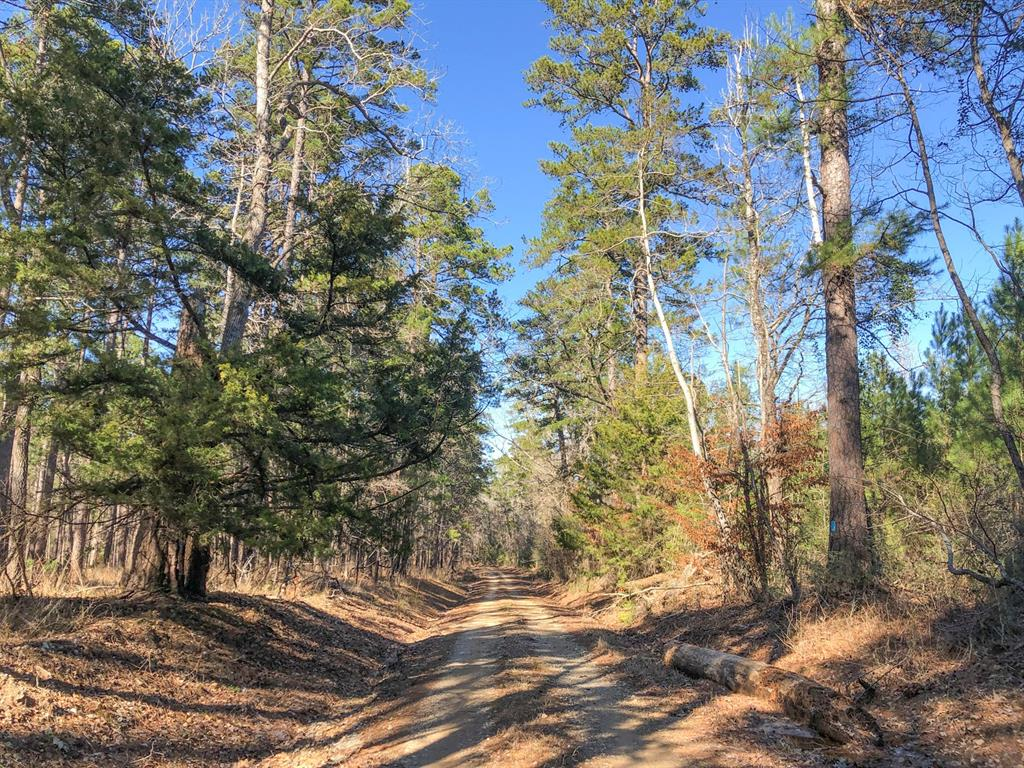 Beautiful rolling and wooded in mostly 2009 pine plantation with mixed hardwood/pine creek drains. Adjoins the Davy Crockett National Forest! Tract is bisected by a Private Rd. The out tract is a cemetery.