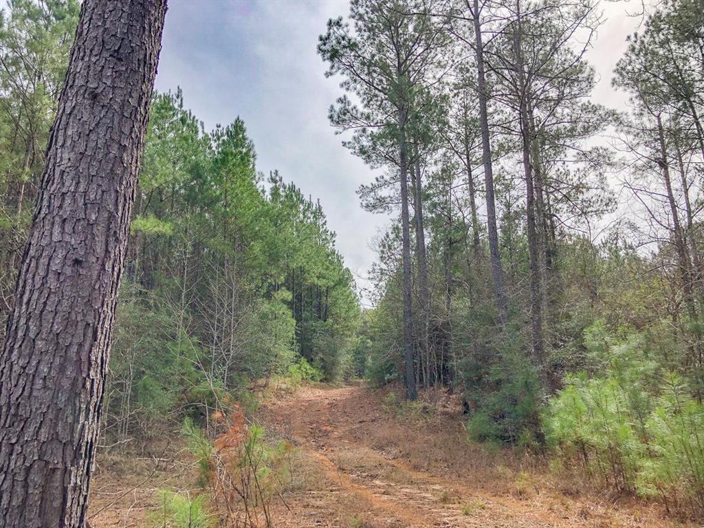 0 Off Fire Tower Road, Newton, TX 75966