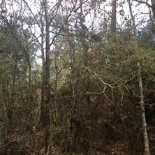 tbd Wilderness, Point Blank TX 77364