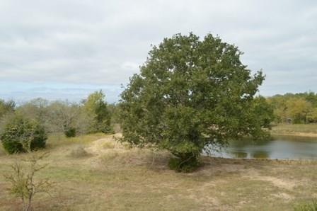 TBD County Rd 671, Teague, TX 75860
