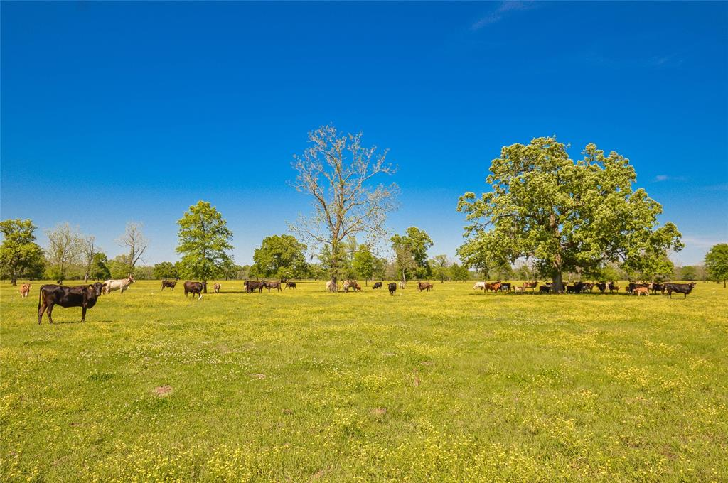 1258 County Road 2117, Cleveland, TX 77327