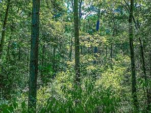 29 Forest, Huntsville, TX, 77340