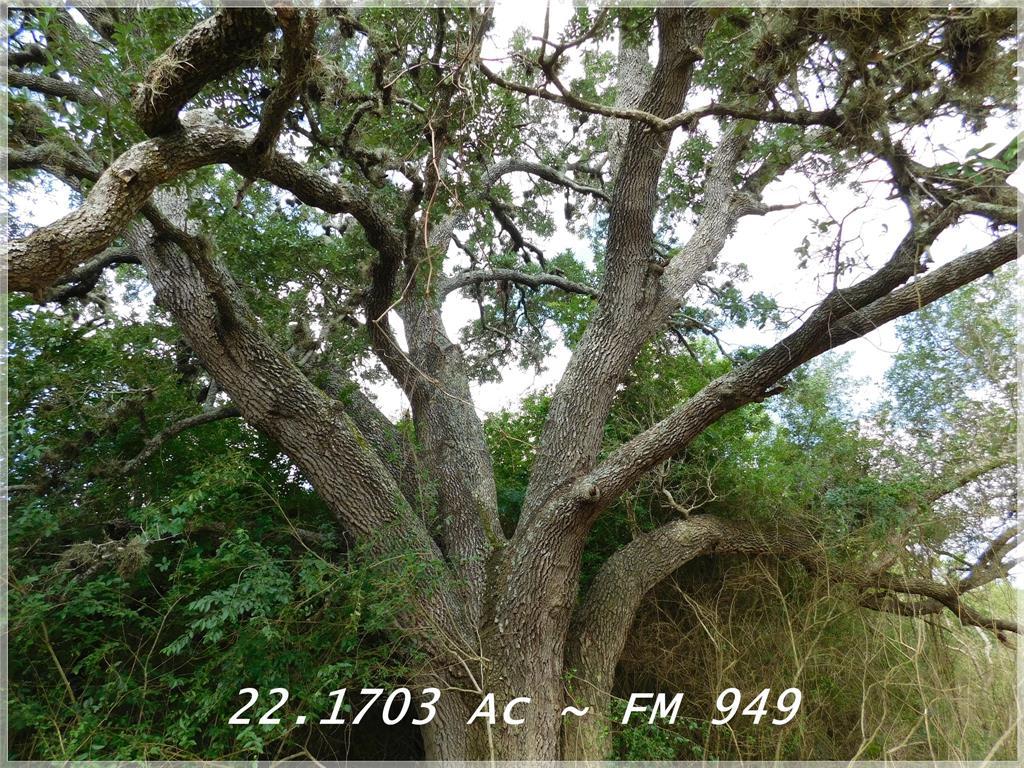 0 TBD FM 949, Columbus, TX 78934