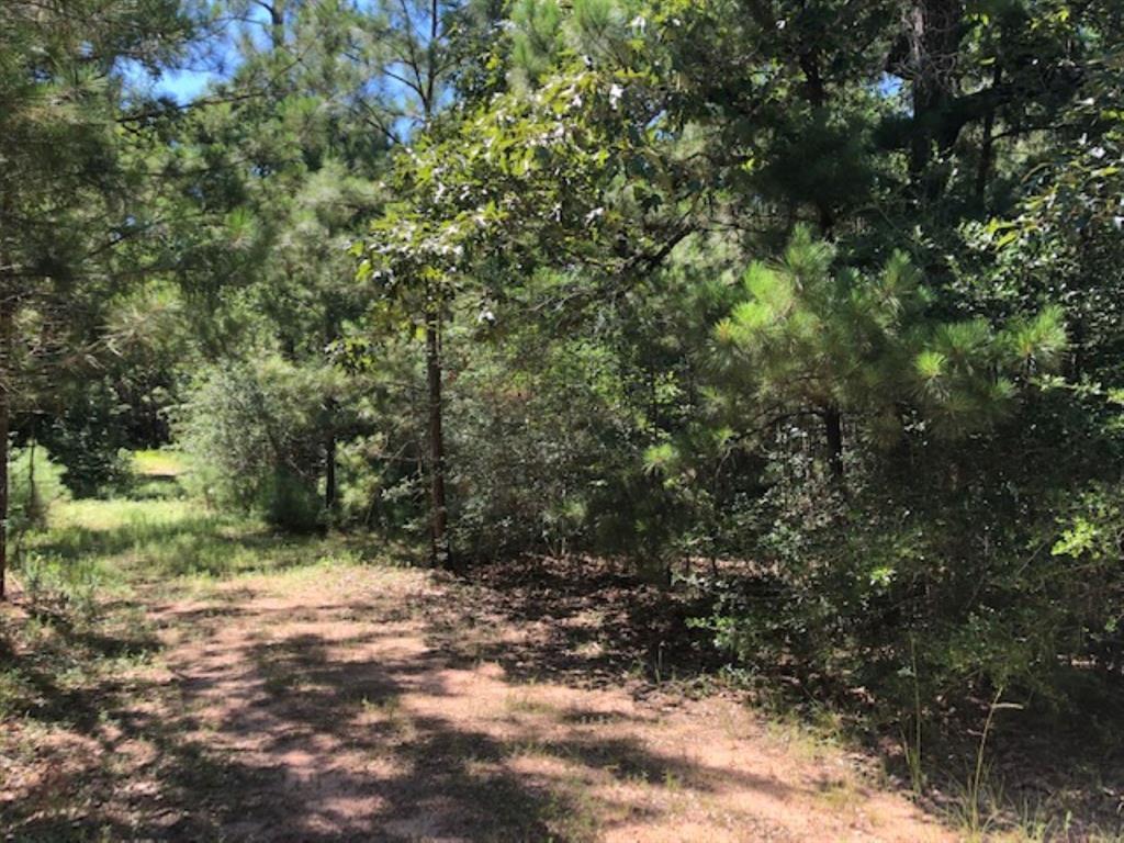 0 Nichols Sawmill Road, Magnolia, TX 77355