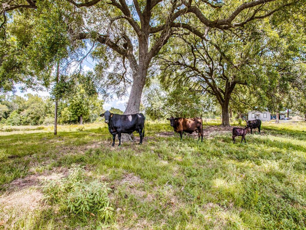12060 N St Hwy 94, Apple Springs, TX 75926
