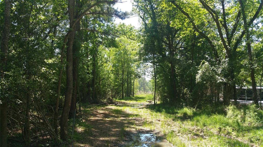 22542 Tree Monkey Road, New Caney, TX 77357