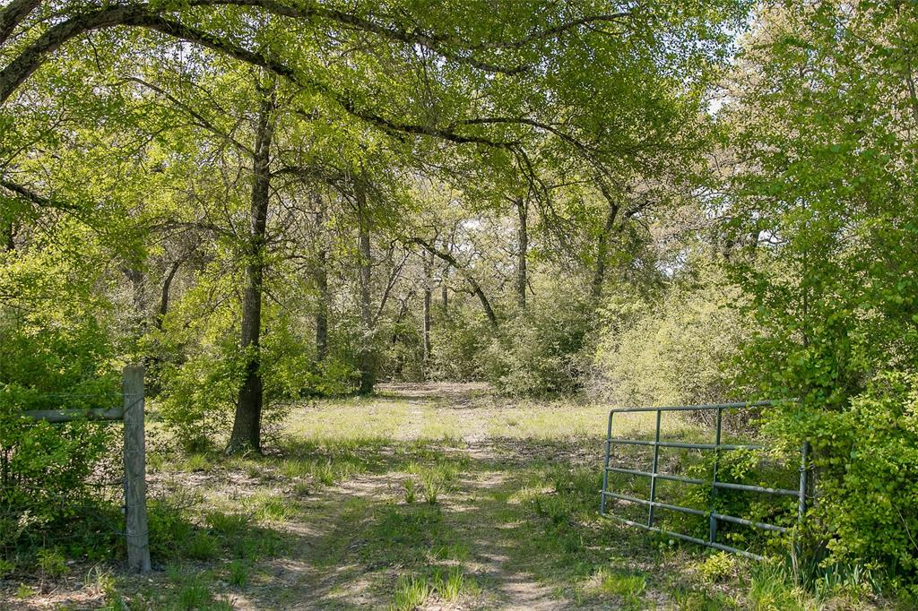 TBD (+/-102 acres) CR 316, Caldwell, TX 77836