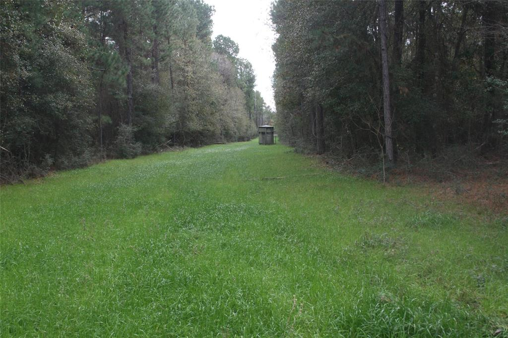 Beautiful rolling hill type property with Lots of trees and numerous home sites. Watch the will life in the front yard. Minutes from Magnolia and only a couple of miles from the future Aggie Expressway now under construction. This area will be growing fast with new roads coming now.