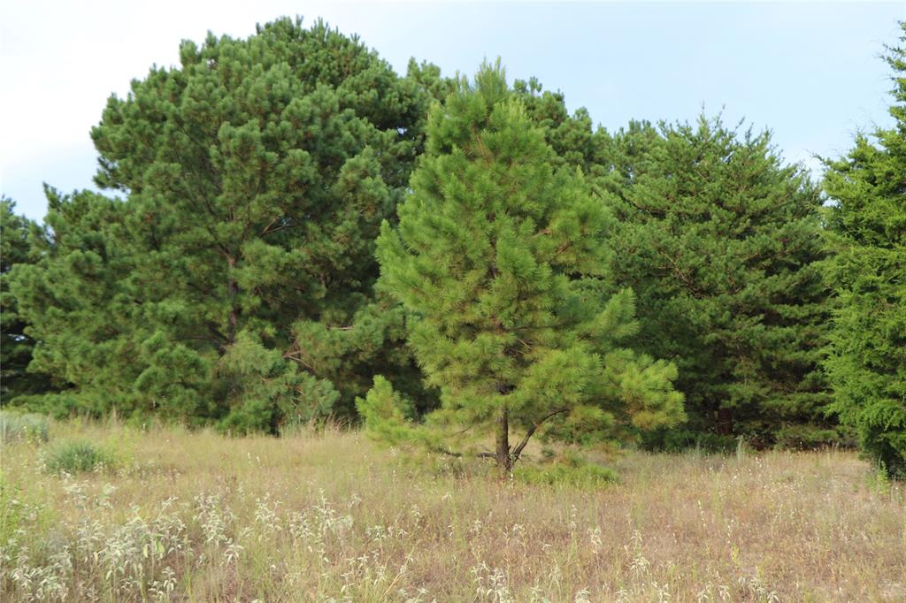 Lot-2 Zebra Crossing, Larue, TX 75770