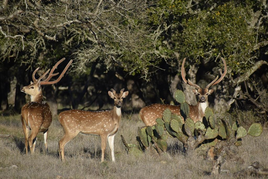 2418 Taylor Ranch Road, Rocksprings, TX 78880