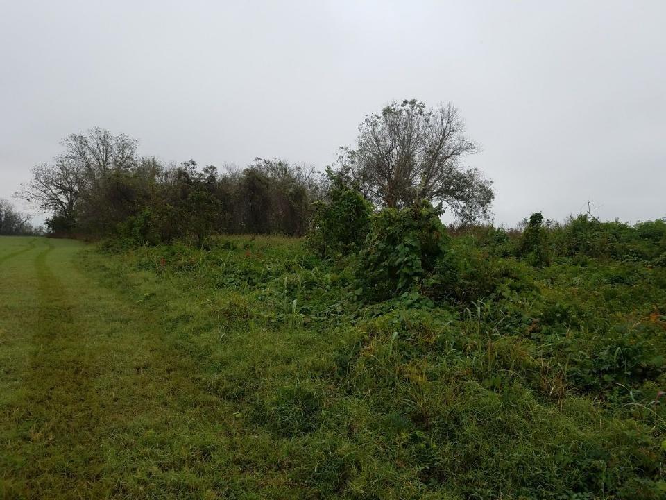 3900 CR 267, Elm Grove, TX 77434