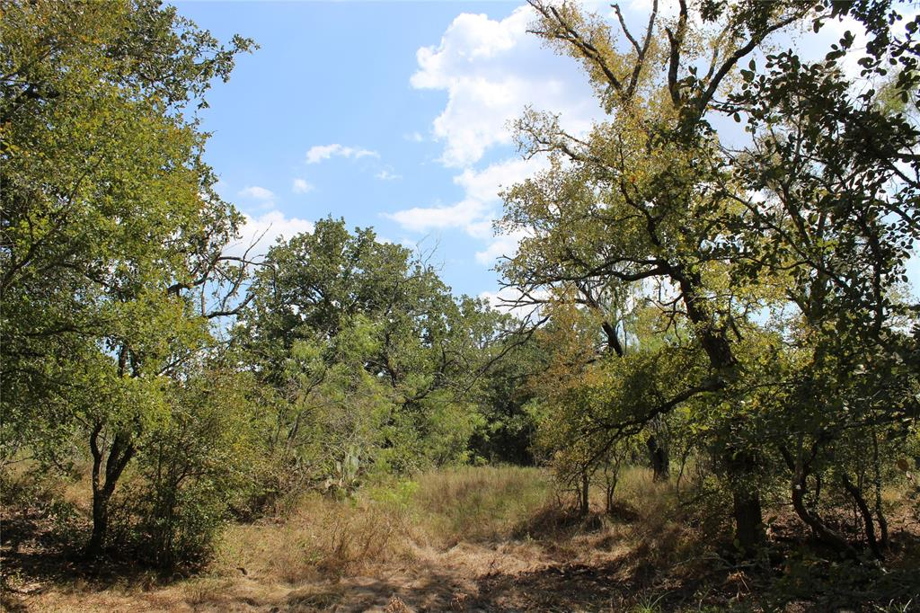 Beautiful rolling heavily wooded property with Live Oak, Post Oak, Mesquite and other native browse and grasses and FM 2814 frontage for access. This place is located between Houston and San Antonio just Southeast of Waelder near the towns of Gonzales and Flatonia in Eastern Gonzales County. This tract could make a nice building site or recreational property. Native wildlife in the area include Whitetail deer, turkey and feral hogs. The property has a view of the surrounding country side to the South. The elevations run from 310 above msl to 340 above msl. The soils consist of sandy loam overlying a clay subsoil. The property has GVEC electric service available. The Sellers own a portion of the mineral estate and will convey one half of their owned mineral estate to the Buyer at closing. There are additional adjoining tracts available from 25 acres to 49+ acres.