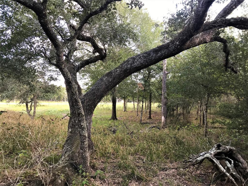 0 Sandy Creek, Garwood, TX 77442