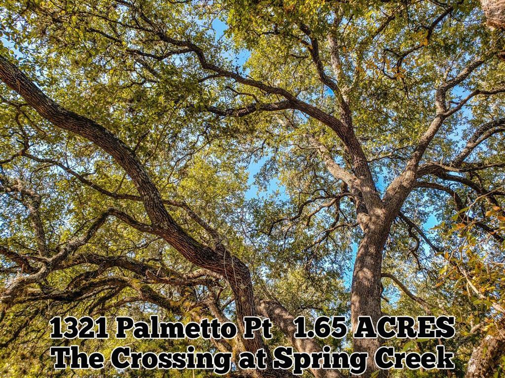 1321 Palmetto Point, Spring Branch, TX 78070