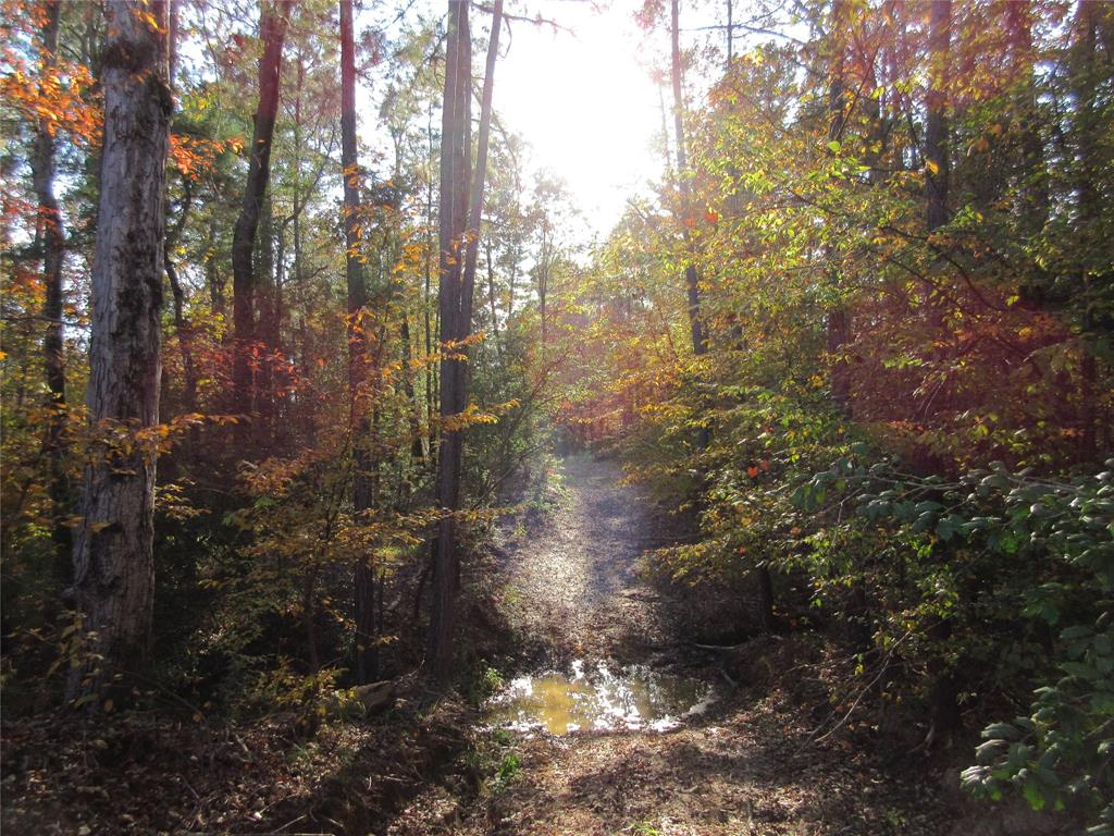 Great 82 Acre Hunting & Recreational tract deep in the East Texas piney woods. The property is located in SE Anderson County extending into Houston County. Land has very rolling/sloping contours with two wet weather creeks crossing the tract offering a possible future pond site. Trails make it easy to get around the property and check out the clearing at top of hill just ready for a home, RV or camping spot. Land is covered with a mix of hardwood & plantation pine that seem to be a magnet for the wildlife, there are tracks everywhere. Great weekend escape to enjoy the peaceful serenity of the country. Property has long road frontage on ACR 1217 & CR 1685. Electricity nearby buyer to confirm, water well would be needed.