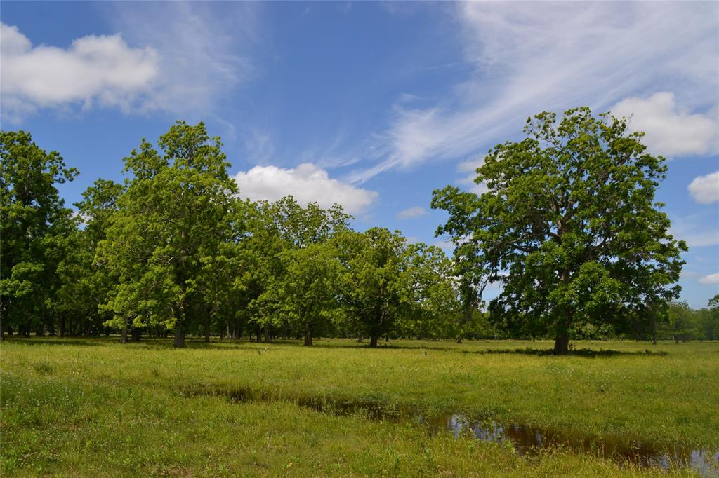 This is the one! Part pasture with mature pecan trees, some thick, heavy woods for deer/hog hunting. Creek for duck hunting and fishing. One hour from Houston. Absolutely beautiful!! Bring your horses and bring your cows! Enjoy the quiet of country life while watching cattle graze and deer roam. This could be your quiet country getaway you have always wanted!