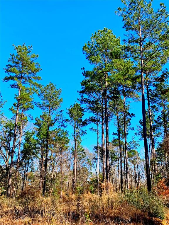 Ideal rural +/- 50 acre parcel for timber or recreational investment. Historically managed for timber production this property consist of 2001 & 1988 pine plantation offering future income opporunty. Property features Legg Creek on the western boundary, and has asphalted road frontage along county road 783. Offering seclusion but yet features the convenience of location being approximately 1.5 miles from Douglass schools, and a short drive via Hwy 21 to Nacogdoches. Not to mention, you can be on Lake Nacogdoches with a few minutes drive.