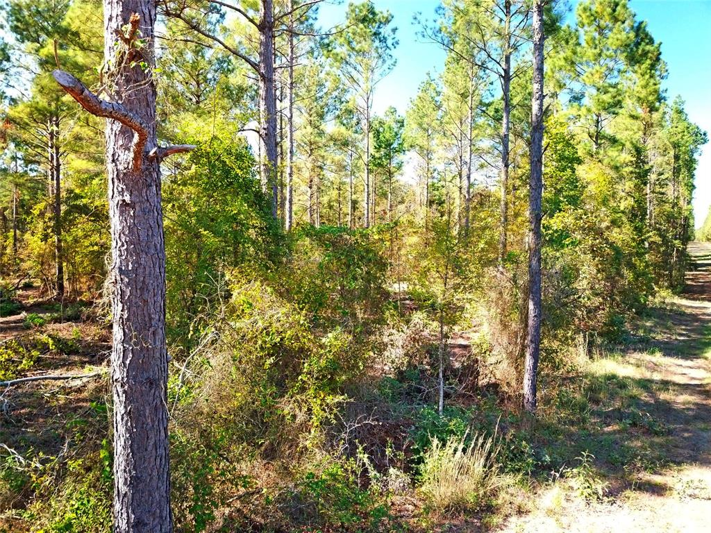 Conveniently located +/- 126 acre timberland and recreational investment. Property features a well managed stands of 2000 & 1993 age pine plantation with areas of native pine/hardwood stands along Mill Creek. This property is aesthetically pleasing and well suited for a hunting and recreational property, or makes an ideal rural home place. Gently rolling topography and towering timber stands. Property accessed via asphalt county road frontage along 779, being accessible to Highway 21 in less than 2 miles.