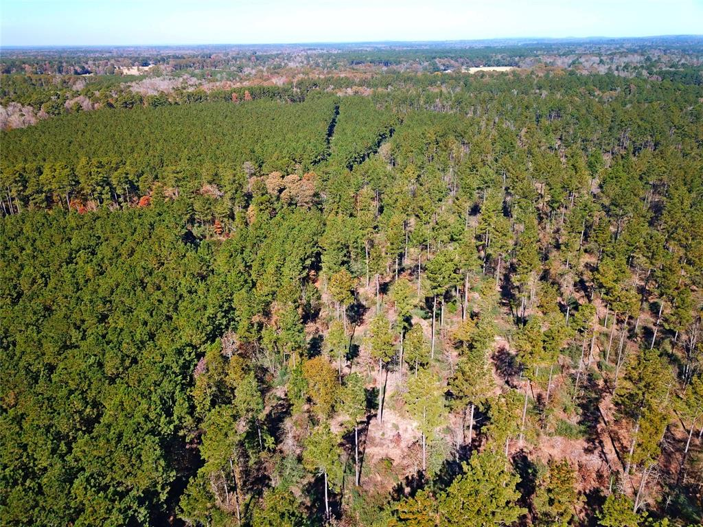 Great timbered +/- 50 acre property for a homestead, or timber and recreational investment. Property features historically managed pine plantation with ages from 2001 & 1988, along with areas a native pine bordering Legg Creek at the western boundary of the property. A great hunting property or investment to manage for long term timber production. Asphalt county road frontage and convenient access to Hwy 21. Lake Nacogdoches is only a short drive away, and the property is situated approximately 1.5 miles from Douglass school.