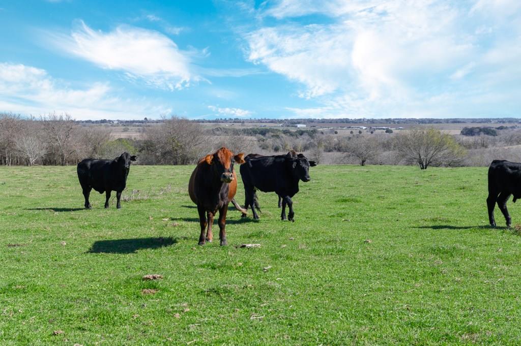 TBD FALKE-HEINRICH RD, Schulenburg, TX 78956