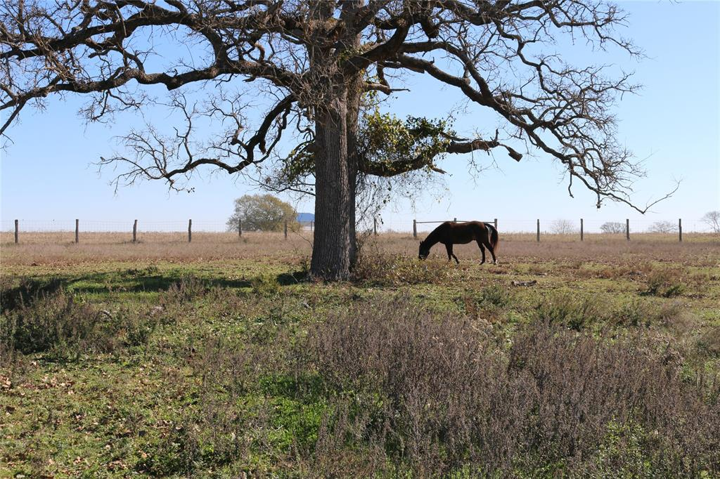 Madisonville - Small Acreage Homesite Available!  5 +/- acres being offered located outside of city limits on a county maintained road close to town.  Land is level, partially fenced with scattered trees and native grasses.  Surrounded by beautiful country views, setting is picturesque.