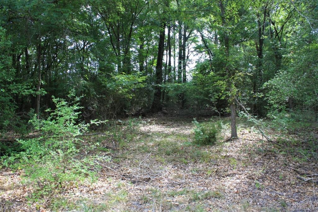 1.96 Acres of woods that fronts on FM 1119 located 4 miles south of Centerville Texas.  Hardwood and pine timber cover the property, three phase electricity, telephone and water are available.  Great potential home site. Centerville ISD!!